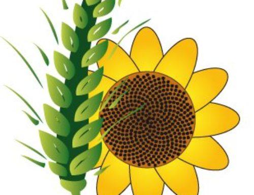 Encargado/a de procesos de selección de legumbres para Cereales Serabur SL